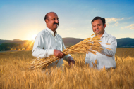 Wheat Corporate Photography for Engro Fertilizers Pakistan